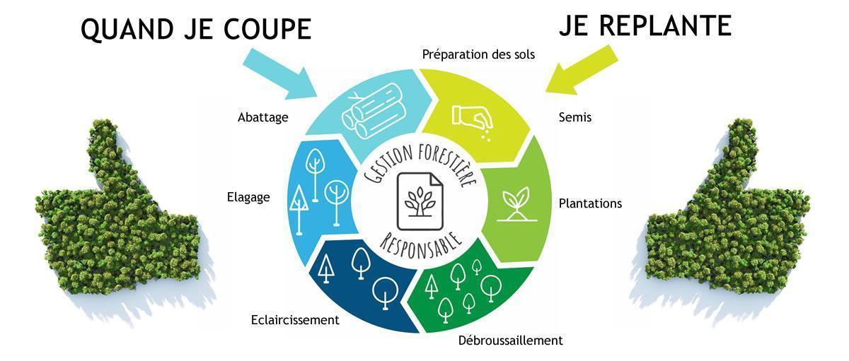 Production de fibres vierges : Un cercle vertueux pour les forêts d'europe.